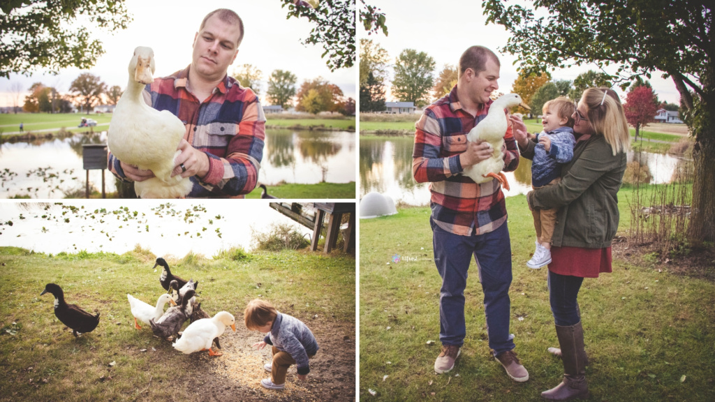 family of three playing with their local ducks at their home in alexandria ohio