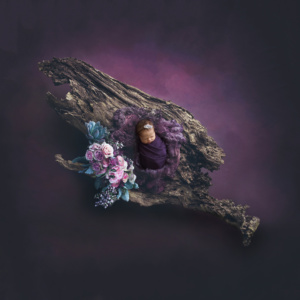 stunning portrait of newborn baby girl in dark eggplant and pink colored flowers on giant log
